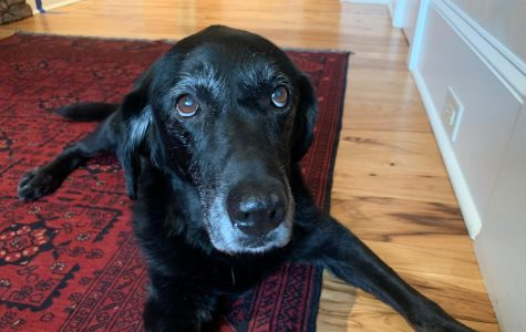 Pictured above is Mason (10), Dia Chiusano's foster pet
